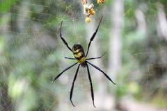 Araña en un Web Macro fotos de archivo libres de regalías