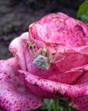 Araña en una flor Imagen de archivo libre de regalías