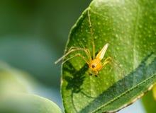 Araña en una hoja Imágenes de archivo libres de regalías