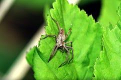 Araña en una hoja Fotografía de archivo