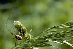 Araña en una planta fotografía de archivo