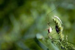 Araña en una planta Fotos de archivo