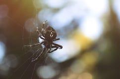 Araña en una red Fotografía de archivo libre de regalías