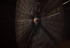 Araña en Web imagen de archivo libre de regalías