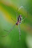 Araña en Web Fotografía de archivo libre de regalías