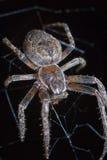 Araña en Web Imagenes de archivo