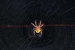 Araña en Web Foto de archivo libre de regalías
