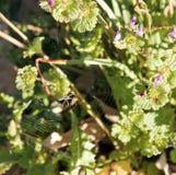 Araña en Web con las flores del resorte Imagenes de archivo