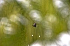 Araña espinosa del Orbe-Tejedor Imágenes de archivo libres de regalías