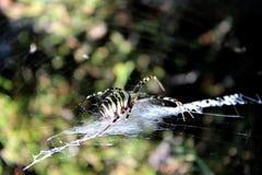 Araña gigante Fotografía de archivo libre de regalías