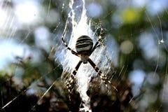 Araña gigante Foto de archivo