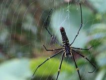 Araña gigante de maderas Fotografía de archivo