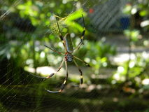 Araña grande Fotografía de archivo