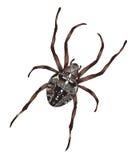 Araña grande con el gráfico cruciforme en una parte posterior. Fotos de archivo libres de regalías