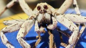 Araña grande que le mira imagenes de archivo