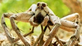 Araña grande que le mira Imágenes de archivo libres de regalías
