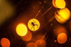 Araña grande que se sienta en punto ligero y el web Imágenes de archivo libres de regalías