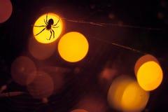 Araña grande que se sienta en punto ligero y el web Imagen de archivo libre de regalías