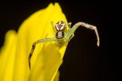 Araña hermosa Imagen de archivo libre de regalías