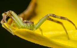Araña hermosa Fotos de archivo libres de regalías