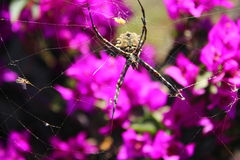 Araña hermosa con el fondo florido Fotos de archivo
