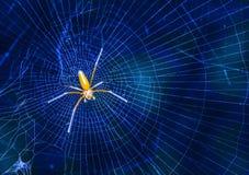 Araña hermosa del asesino del insecto en Malasia Imagen de archivo libre de regalías