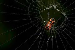 Araña hermosa del asesino del insecto que come en Malasia Imágenes de archivo libres de regalías