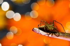 Araña hermosa en fondo anaranjado Fotografía de archivo