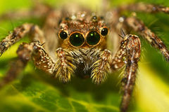 Araña macra Imagen de archivo
