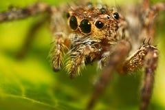 Araña macra Imagenes de archivo