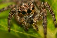 Araña macra Fotos de archivo libres de regalías