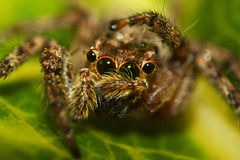 Araña macra Foto de archivo libre de regalías