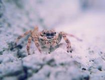 Araña macra Fotos de archivo