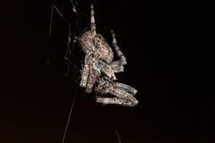 araña Macro Imagenes de archivo