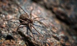 Araña Macro1 Fotos de archivo libres de regalías