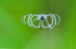 Araña manchada con las redes Foto de archivo libre de regalías