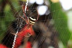 Araña minúscula Fotografía de archivo libre de regalías