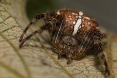 Araña muy grande en el salvaje Foto de archivo