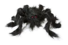 Araña negra Imagen de archivo libre de regalías