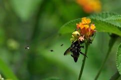 Araña que come la abeja Foto de archivo