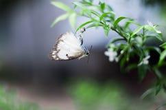Araña que come la mariposa Foto de archivo