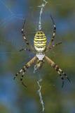 Araña que come una abeja Imagenes de archivo