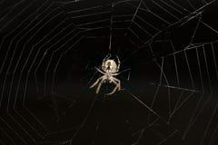 Araña que cuelga en un Web Fotos de archivo libres de regalías