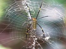Araña que espera con su web Fotografía de archivo