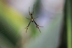 Araña que hace Web Foto de archivo