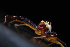 Araña que mira para arriba imagen de archivo