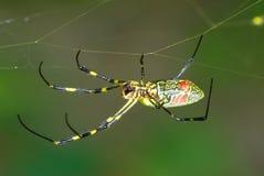 Araña que recorre Imagenes de archivo