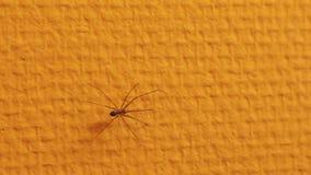 Araña que se arrastra en la pared almacen de metraje de vídeo
