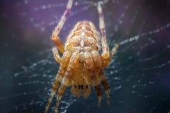 Araña que se sienta en el web con el fondo blury colorido Imagen de archivo