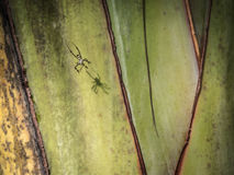 Araña que sube en el web Imagen de archivo